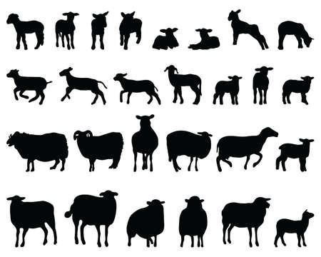 Black silhouettes sheep on a white background