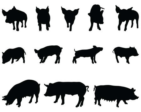 Black silhouettes pigs on a white background