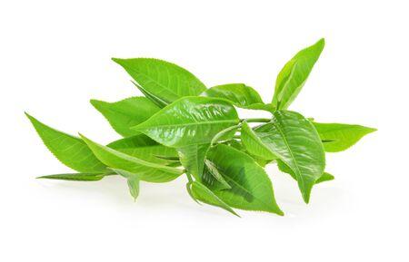 Feuilles de thé fraîches sur fond blanc Banque d'images
