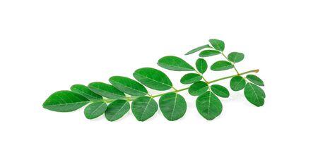 Moringa leaves on white background. Stock Photo