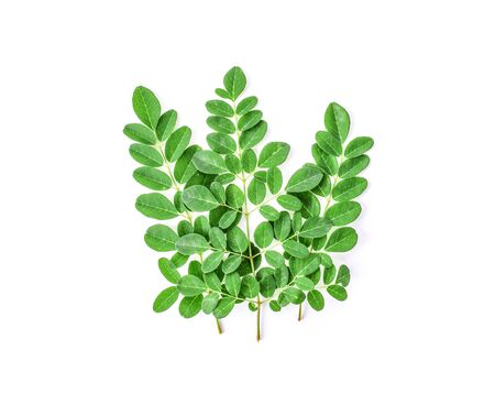 Moringa leaves on a white background. Stock Photo - 129146551