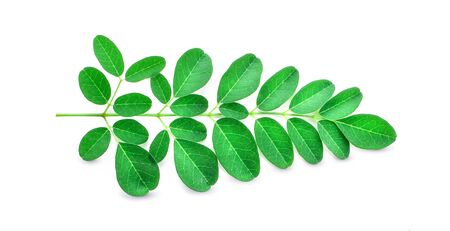 Moringa leaves have medicinal properties.