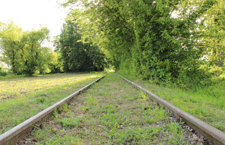 forest railway: Old and unused railroad tracks in middle of forest, railway tracks without train Stock Photo