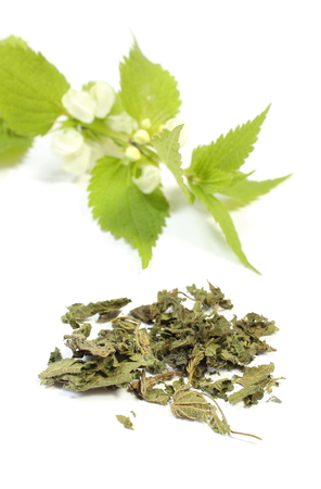 Heap of dried nettle and fresh stinging nettle with white flowers in background, Isolated on white background photo