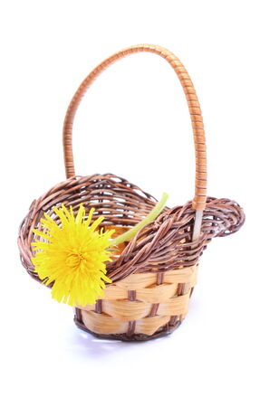 Yellow fresh flower of dandelion in wicker basket  Isolated on white background photo