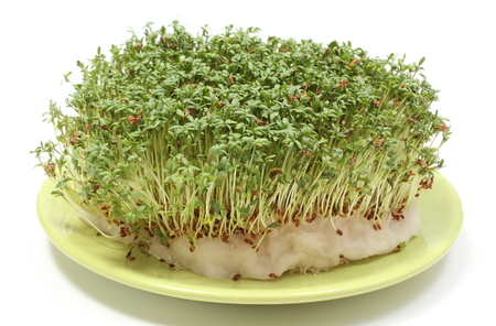 cottonwool: Island made with green cuckoo-flower on cotton pad on green plate