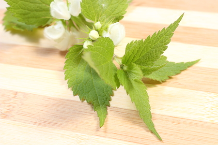 diuretic: Fresh stinging nettle with white flowers  Isolated on wooden background