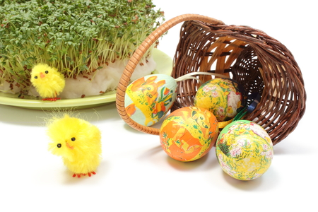 overturned: Closeup of funny Easter chicken, colorful painted Easter eggs in overturned wicker basket and watercress, Easter decoration. Isolated on white background