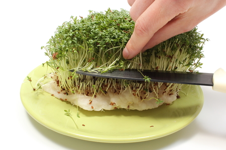 cress: Hand of woman with knife cuts fresh green cress, Easter decoration