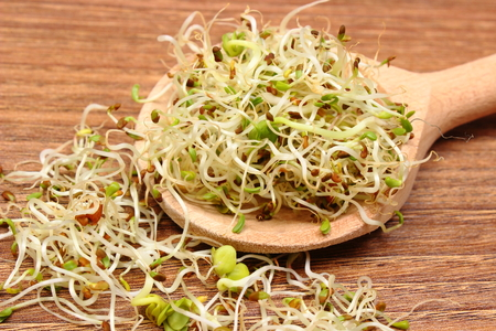 sprout: Fresh alfalfa and radish sprouts on wooden scoop lying on wooden table, healthy lifestyle diet food and nutrition