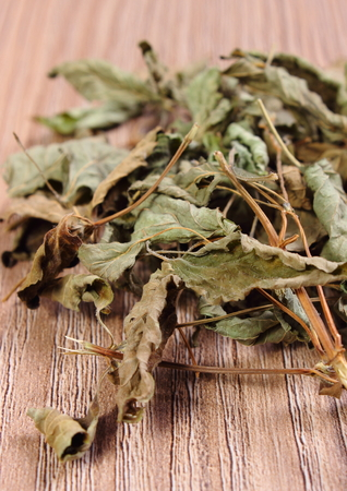 herbalism: Heap of healthy dried lemon balm on wooden table, sedative herbs, concept for healthy nutrition and herbalism Stock Photo