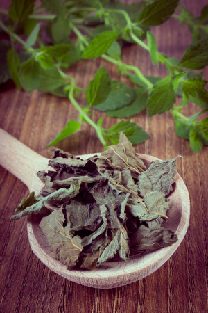 sedative: Vintage photo, Healthy dried and fresh lemon balm with spoon on wooden table, sedative herbs, concept for healthy nutrition and herbalism
