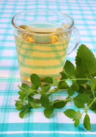 sedative: Fresh green lemon balm and glass of calming herbal drink on tablecloth, sedative herbs, concept for healthy nutrition and herbalism