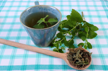 calming: Heap of dried and fresh green lemon balm with cup of calming herbal drink on tablecloth, sedative herbs, concept for healthy nutrition and herbalism Stock Photo