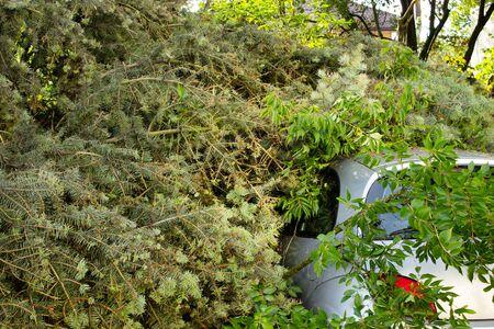 wind storm: Car trapped under fallen tree after wind storm, broken tree