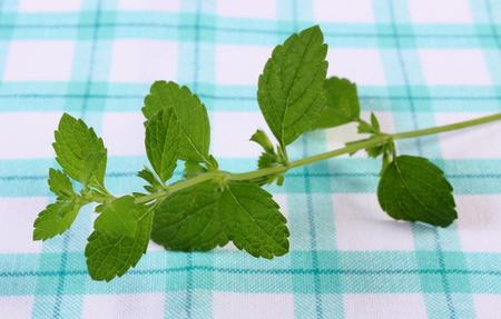 sedative: Fresh green lemon balm on checkered tablecloth, sedative herbs