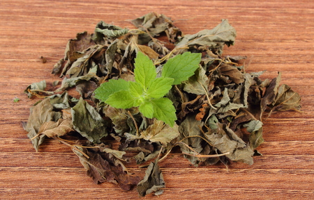 sedative: Healthy fresh and heap of dried lemon balm on wooden table, sedative herbs, concept for healthy nutrition and herbalism