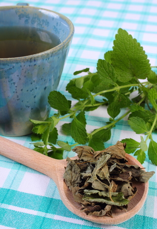calming: Heap of dried and fresh green lemon balm with cup of calming herbal drink on tablecloth