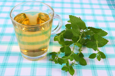 herbalism: Fresh green lemon balm and glass of calming herbal drink on tablecloth, sedative herbs, concept for healthy nutrition and herbalism