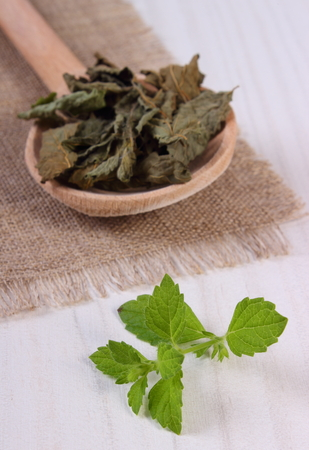 herbalism: Healthy fresh and dried lemon balm with spoon on white wooden table, sedative herbs, concept for healthy nutrition and herbalism Stock Photo