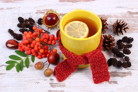 acorn: Cup of tea with lemon wrapped woolen scarf, warming beverage for flu and cold, autumn decoration of rowan, acorn, chestnuts, alder and pine cones Stock Photo