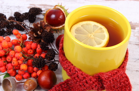 Cup of tea with lemon wrapped woolen scarf, warming beverage for flu and cold, autumn decoration of rowan, acorn, chestnuts and alder cone Standard-Bild