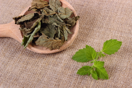 sooth: Healthy fresh and dried lemon balm with spoon on jute canvas, sedative herbs, concept for healthy nutrition and herbalism