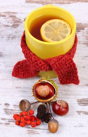 yellow alder: Cup of tea with lemon wrapped woolen scarf, warming beverage for flu and cold, autumnal decoration of chestnut, rowan and alder cone