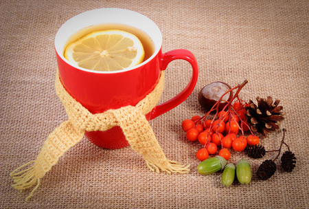 hot: Cup of hot tea with lemon wrapped woolen scarf and autumn decoration, warming beverage for flu and cold