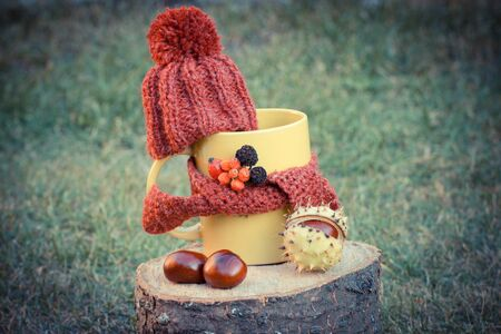cone shell: Vintage photo, Yellow cup of hot tea with woolen cap wrapped woolen scarf on wooden stump in garden, autumn decoration, warming beverage for flu and cold