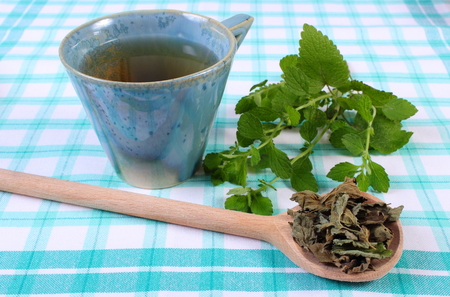 herbalism: Heap of dried and fresh green lemon balm with cup of calming herbal drink on tablecloth, sedative herbs, concept for healthy nutrition and herbalism Stock Photo