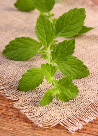 herbalism: Fresh green lemon balm on wooden table, sedative herbs, concept for healthy nutrition and herbalism Stock Photo