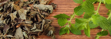herbalism: Healthy fresh and heap of dried lemon balm on wooden table, sedative herbs, concept for healthy nutrition and herbalism