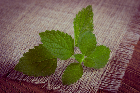 herbalism: Vintage photo, Fresh green lemon balm on wooden table, sedative herbs, concept for healthy nutrition and herbalism Stock Photo