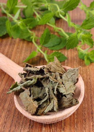 herbalism: Healthy dried and fresh lemon balm with spoon on wooden table, sedative herbs, concept for healthy nutrition and herbalism