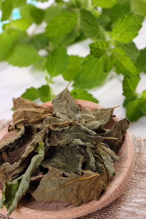 sedative: Healthy dried and fresh lemon balm with spoon on white wooden table, sedative herbs, concept for healthy nutrition and herbalism