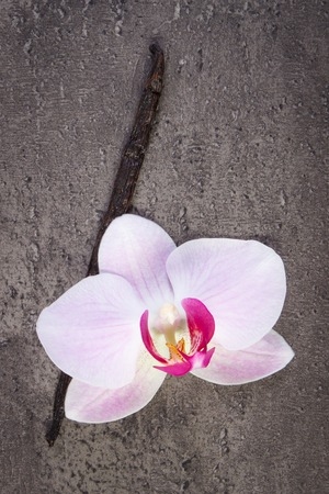 flower structure: Colorful blooming orchid flower and fresh fragrant vanilla sticks pods on structure of concrete