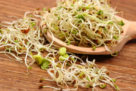 germinate: Fresh alfalfa and radish sprouts on wooden scoop lying on wooden table, healthy lifestyle diet food and nutrition