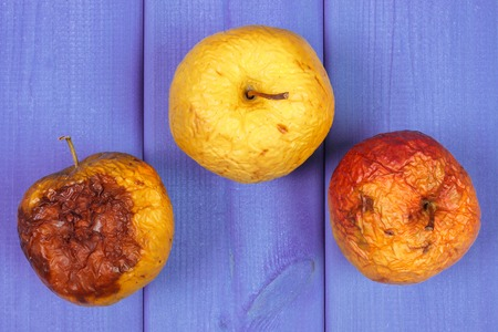 contaminate: Old wrinkled apples with mold on purple boards, unhealthy food