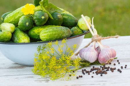 pickling: Ripe cucumbers in metal bowl and spices for pickling cucumbers on old white wooden table in garden on sunny day, healthy nutrition