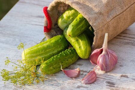 Ripe cucumbers in jute bag, fresh garlic and dill on old wooden table in garden on sunny day, ingredients for pickling