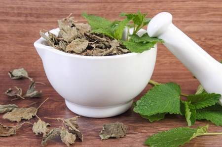 lemon balm: Fresh natural green and dried lemon balm with white mortar on rustic board, healthy lifestyle, herbalism, alternative medicine