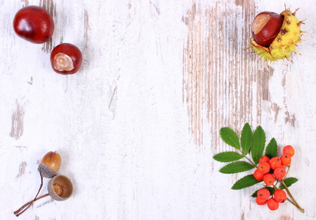 rowanberry: Autumn decoration and copy space for text on old rustic wooden background, red rowan, acorn and chestnuts