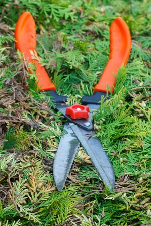 Gardening tool to trim hedge, cutting bushes with garden shears, seasonal trimmed bushes Stock Photo