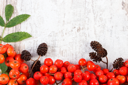 Red autumn rowan with green leaves and alder cone with copy space for text, old rustic wooden background