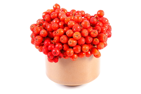 rowanberry: Bunch of red autumn rowan in glass dish on white background Stock Photo
