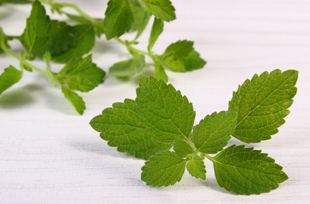 sedative: Fresh green lemon balm on white wooden table, sedative herbs, concept of healthy nutrition and herbalism Stock Photo