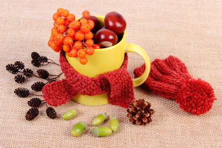 yellow alder: Autumn decoration with yellow cup wrapped woolen scarf and woolen cap on jute canvas