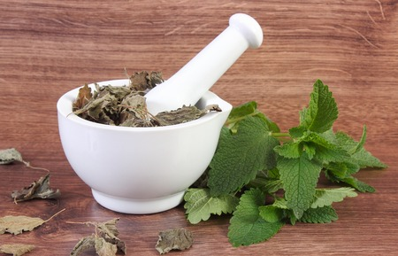 herbalism: Fresh natural green and dried lemon balm with white mortar on rustic board, healthy lifestyle, herbalism, alternative medicine