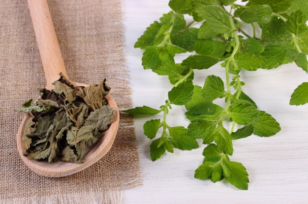 lemon balm: Healthy fresh and dried lemon balm with spoon on white wooden board, sedative herbs, concept of healthy nutrition and herbalism